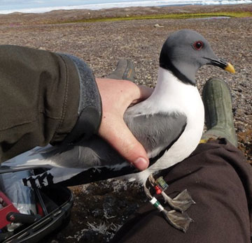 bird tracking